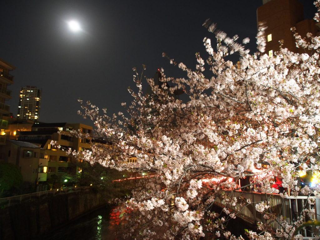 目黒川_夜桜7