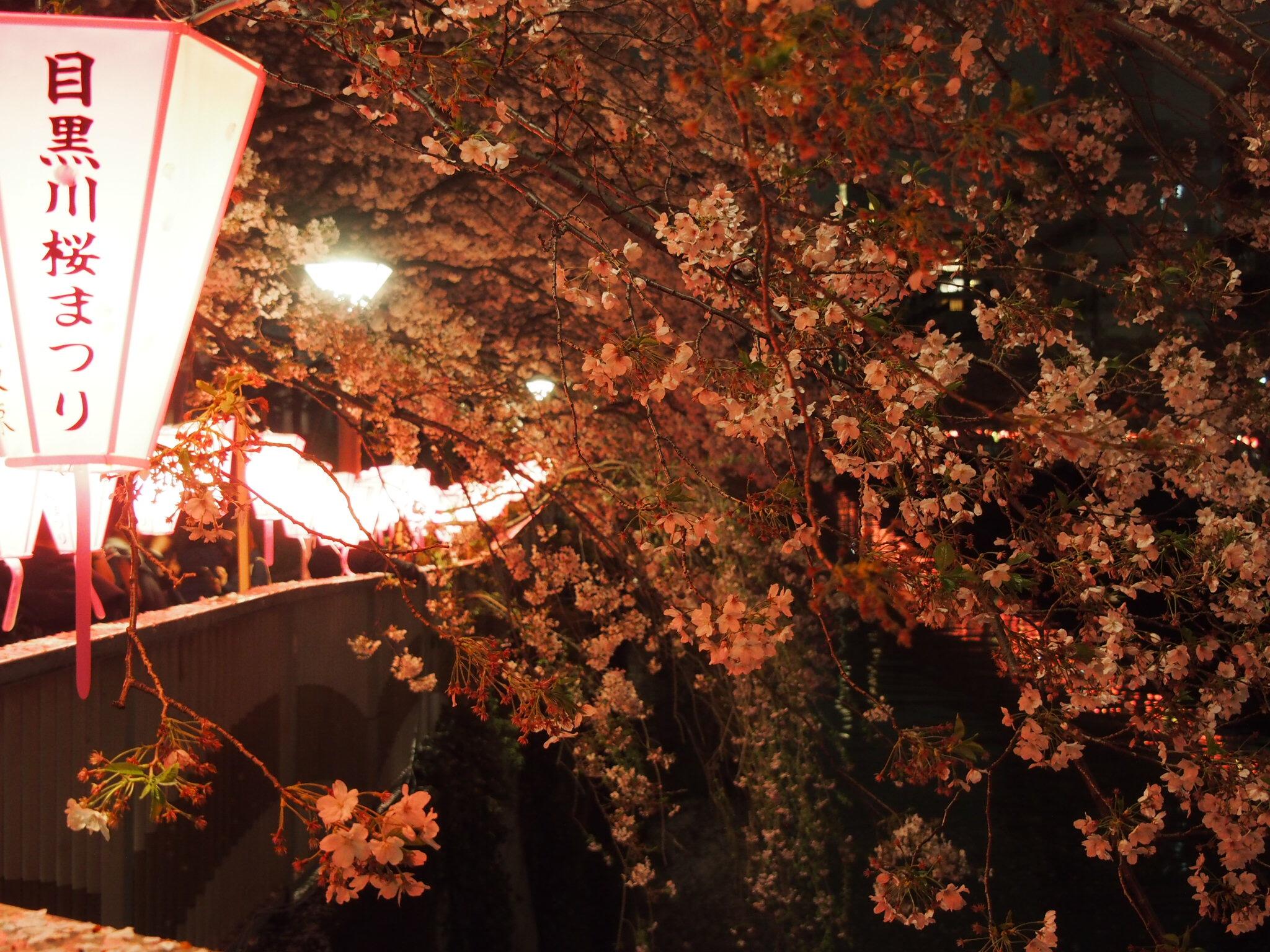 目黒川_夜桜1