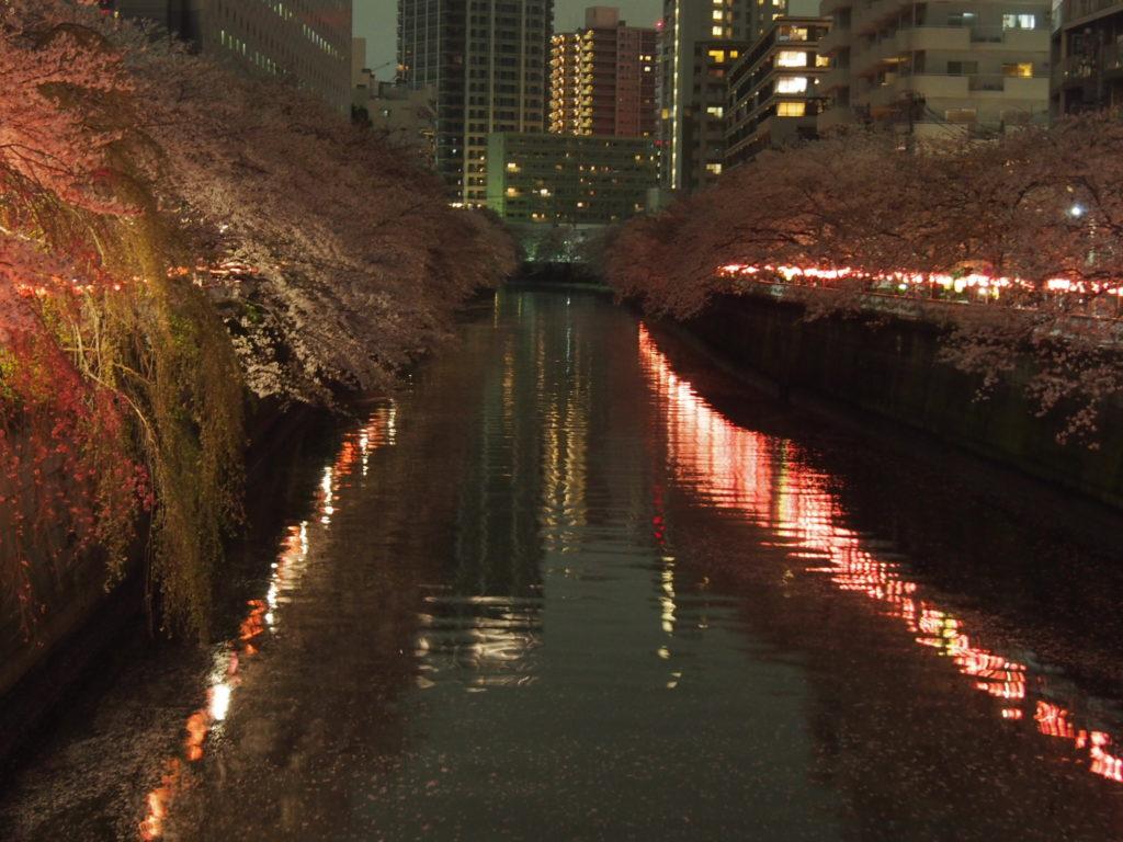 目黒川_夜桜2