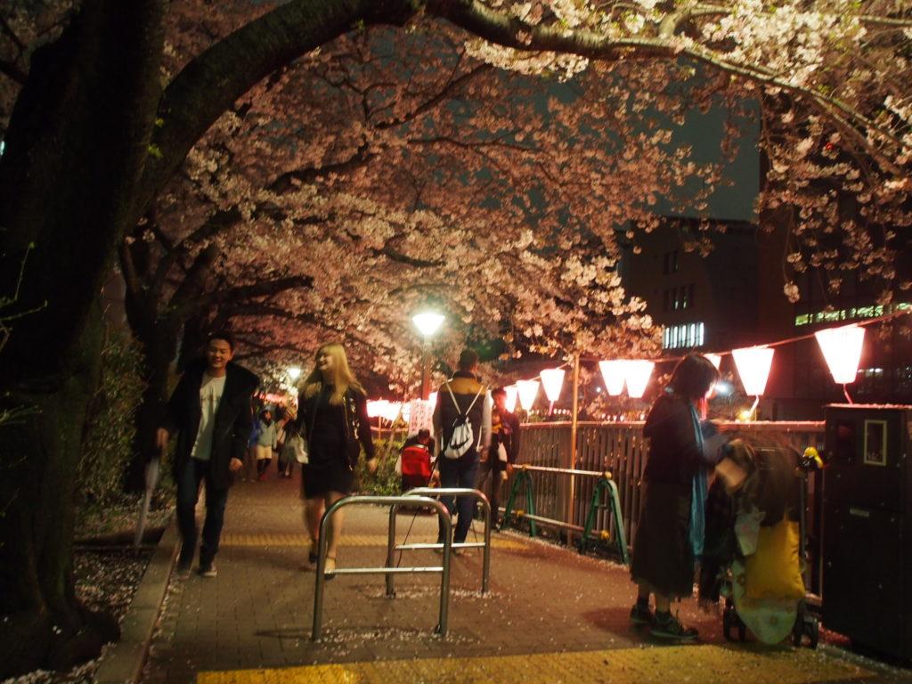 目黒川_夜桜3