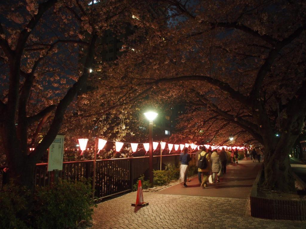 目黒川_夜桜6