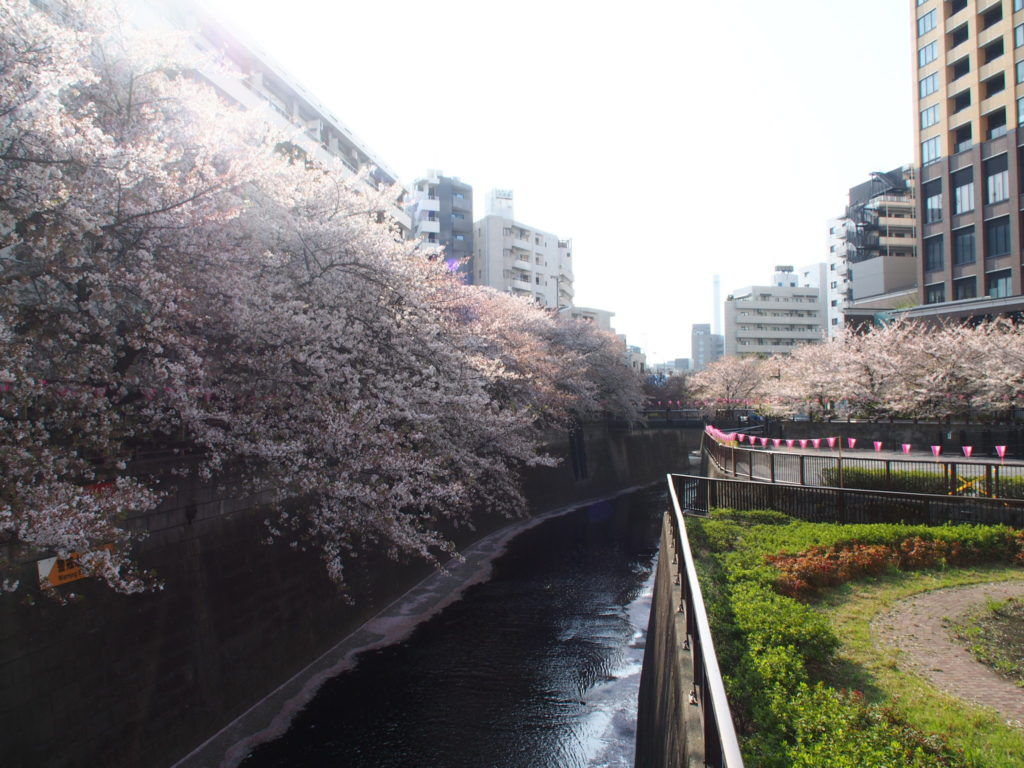 目黒川_桜10