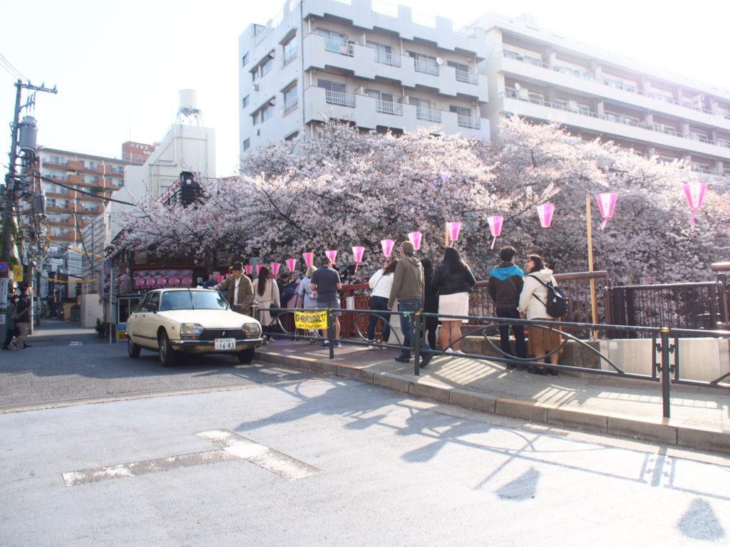 目黒川_桜4
