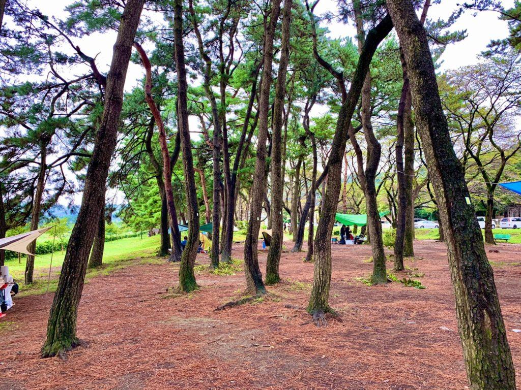 上大島キャンプ場 (3)